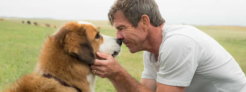 Image from A Dogs Purpose